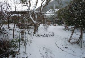 庭の初積雪