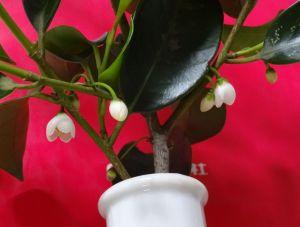 神棚の榊の花