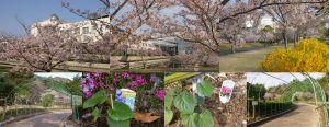 山口県セミナーパーク桜