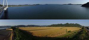 山口湾と麦秋